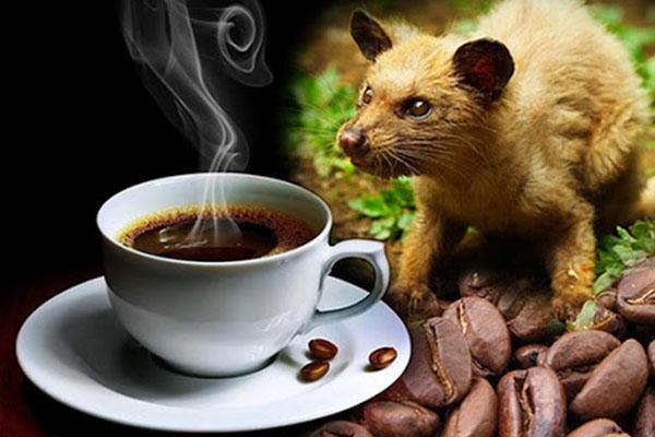 Sự lôi cuốn trong phong cách pha cà phê