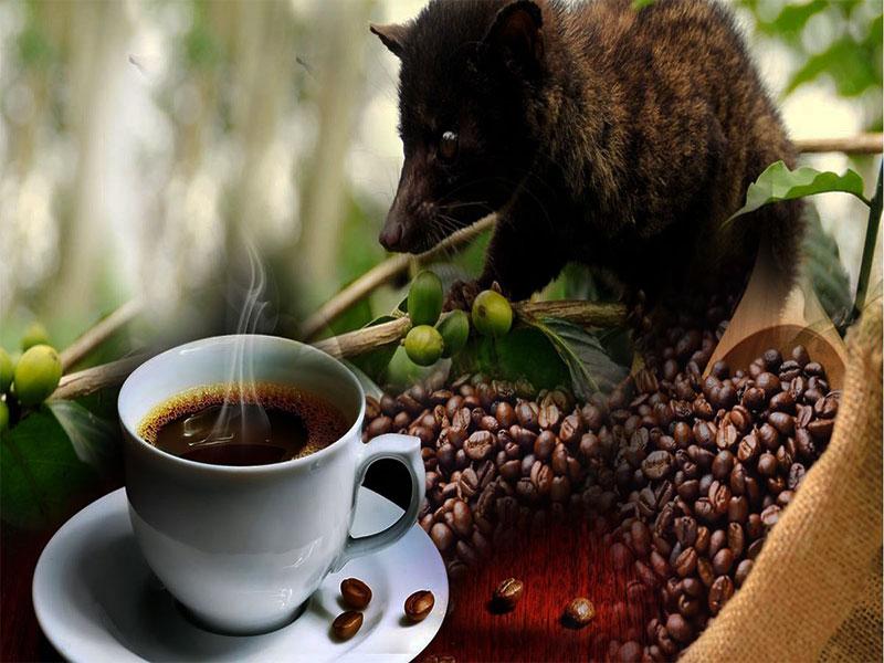 Cách thưởng thức cà phê Chồn nguyên chất đích thực