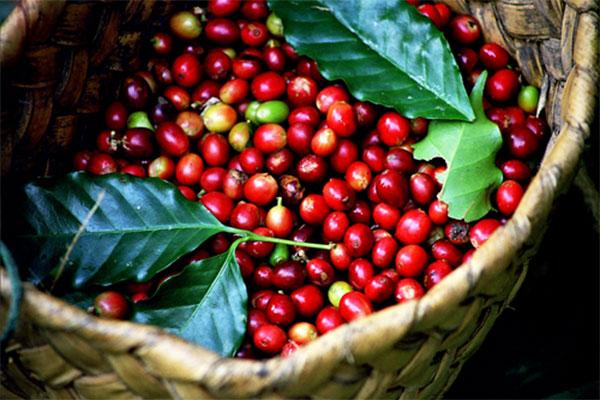 Giá cà phê dao động những ngày cuối tháng 4