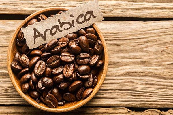 Giới thiệu cà phê Arabica | Cà phê nguyên chất Gia Lai