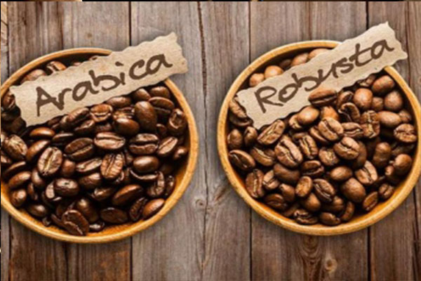 Phối trộn cà phê nguyên chất Arabica và Robusta: Nghệ thuật của sự tinh tế