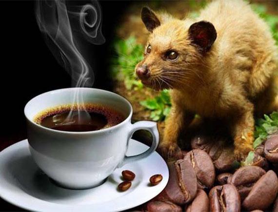 Cà phê đen chồn