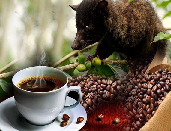 Cà phê sữa chồn